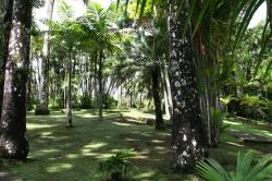Ogród botaniczny Jardin de Balata foto: Piotr Kowalski