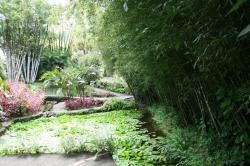 Ogród botaniczny Martynika foto: Piotr Kowalski