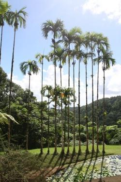 Jardin Balata foto: Kasia Koj