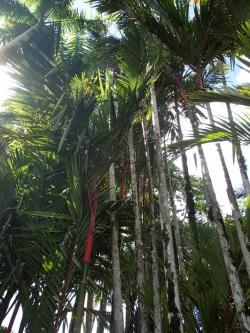 Ogród Jardin Balata foto: Kasia Koj