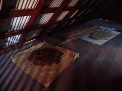 Muzeum kawy Gwadelupa - tutaj poznamy historię uprawy kawy oraz sposoby jej wypalania foto: Kasia