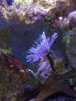 Aquarium de la Guadeloupe foto: Katarzyna Kowalska