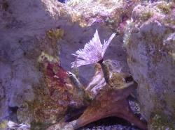 Aquarium of Guadeloupe foto: Katarzyna Kowalska