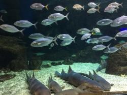 "Oceanarium ""Aquarium de la Guadeloupe"" foto: Katarzyna Kowalska"