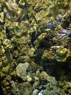 Oceanarium na Karaibach foto: Katarzyna Kowalska