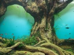 Projekt dżungla - dużo plastiku, choć pomysły jak przedstawić życie w wodzie całkiem ciekawe foto: Kasia Koj