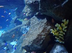Na początku wita nas Nemo foto: Kasia Koj