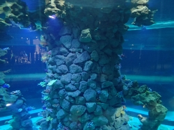 Cylindryczne akwarium widziane z różnych poziomów foto: Kasia Koj