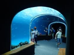"Niesamowita podwodna podróż w Aquarium ""Poema del Mar"" foto: Kasia Koj"