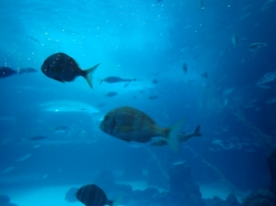 """Największe akwarium na świecie w Aquarium """"Poema del Mar"""" foto: Kasia Koj"""
