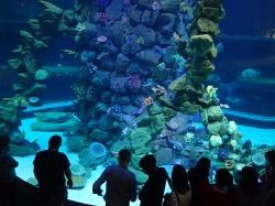 Życie podwodne..... jasne, ciemne, szare, kolorowe... poznajemy jego wszystkie kolory foto: Kasia Koj