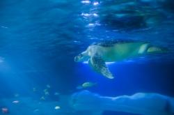 """Oceanarium """"Sea Life"""" (Porto) foto: Michał Czaplicki"""