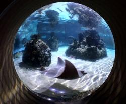 Gratka dla dzieci i dorosłych - Sea Life - Charter.pl foto: Kasia Koj