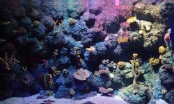 Oceanarium w Porto Sea Life | Charter.pl foto: Kasia Koj