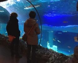 Gratka dla dzieci i dorosłych - Sea Life w Porto - Charter.pl foto: Kasia Koj