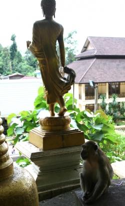 Pomniki Buddy oraz małpki towarzyszą nam całą drogę | Charter.pl foto: Piotr Kowalski