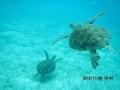 Jesienne Karaiby (Wyspy Zawietrzne 2013)