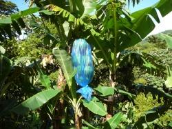 Grenada foto: Michał Handzlik