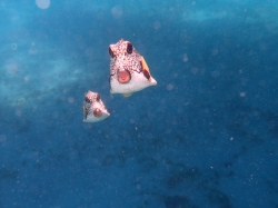 Tobago Cays foto: Kasia & Peter