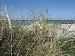 Zieleń przyrody, fiolet wrzosu i biel piasku, to są kolory wyspy Anholt - Charter.pl foto: Katarzyna Kowalska