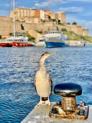 Korsyka, Port of Calvi   Charter.pl foto: Justyna & Bartek