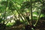 Ogrody botaniczne foto: Peter
