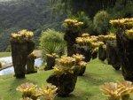 Ogrody botaniczne na żółto foto: Kasia