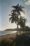 palmy o zachodzie foto: Peter