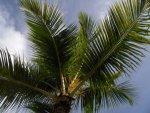 palma w dzień foto: Kasia