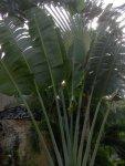 palmy pawie foto: Kasia