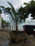 Gdzie ta palma wyrosła?? foto: Kasia