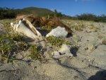 muszelki wyrzucone przez ocean foto: Kasia