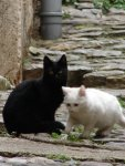 Co tu pisać kotki foto: Rysiu, Timi