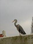 Czapla, albo inny ptak... foto: Kasia