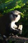 ani małpek :)  foto: Kasia