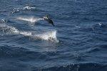 nie zabrakło delfinów  foto: Kasia