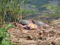 na poduszce zawsze wygodniej  foto: Kaczor