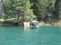 obiad jeszcze w wodzie  foto: Kaczor