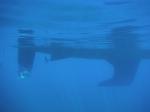 W wodzie foto: Anna Chuchro
