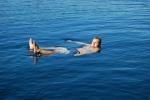 W wodzie foto: Piotr Szczepański