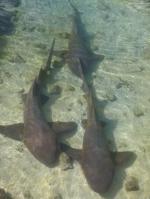 rekiny spacze foto: Kasia