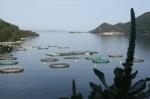 ferma rybia w Sobrze na Mljecie foto: Kasia