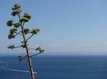 Bonifacio jest atrakcyjnie położonym nad Cieśniną Świętego Bonifacego miasteczkiem w widokiem na Sardynię.  foto: Kasia