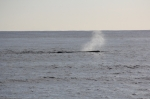 spotkanie z wielorybem foto: Krzysztof Chmura