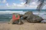 plaża na Barbados