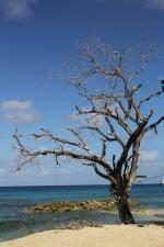 plaża na Barbados foto: Krzysztof Chmura