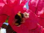 i jeszcze jeden kwiatek foto: Kasia Koj
