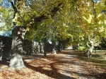 Jesień na Visby foto: Kasia Koj