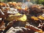 Jakże się cieszę, że żyję na świecie, w którym istnieje październik! Jakież to byłoby okropne, gdyby natychmiast po wrześniu następował listopad! foto: Kasia Koj