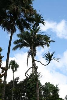 Jesienne Karaiby - Wyspy Zawietrzne foto: Piotr Kowalski